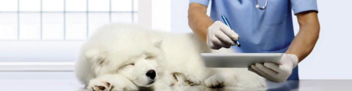 Les vétérinaires appelés en renfort face au COVID19