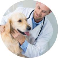 Clinique vétérinaire de la Ferrette