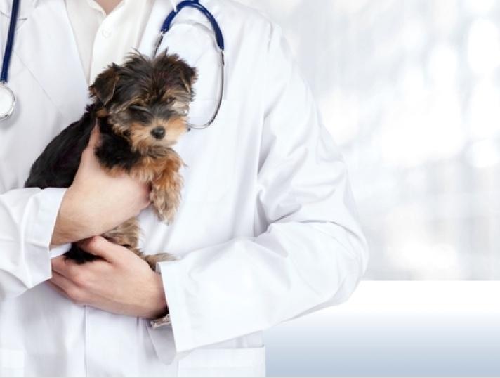 Image de Clinique vétérinaire de la Ferrette